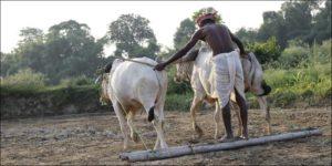 farmers' suicides